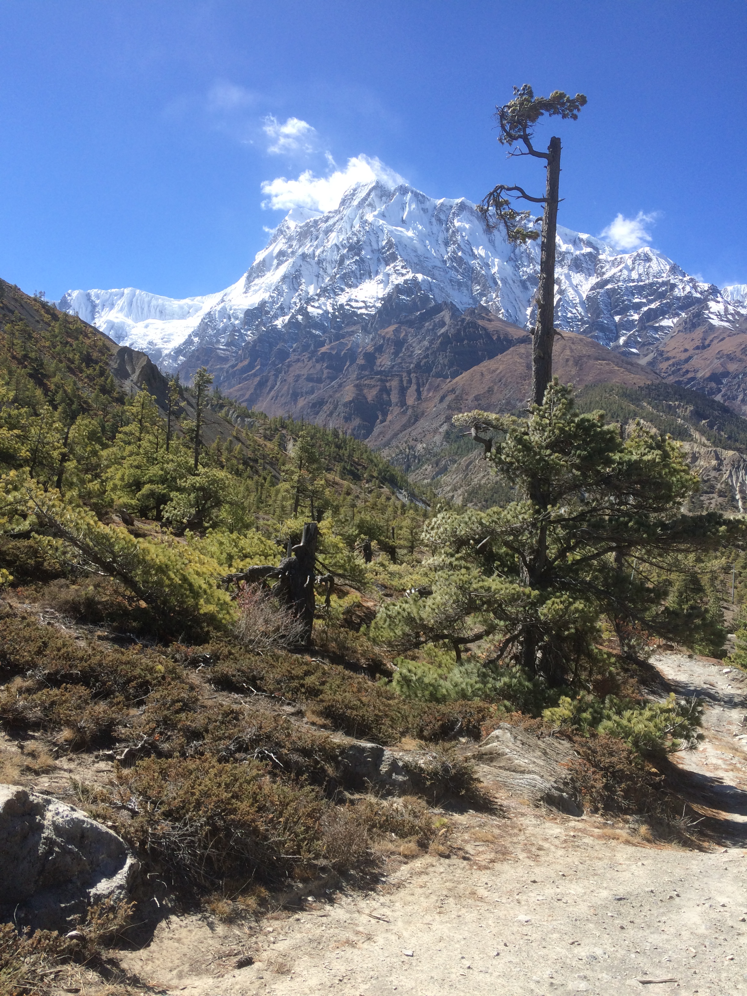 Annapurna IV from Pisang